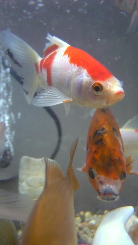 Fish......