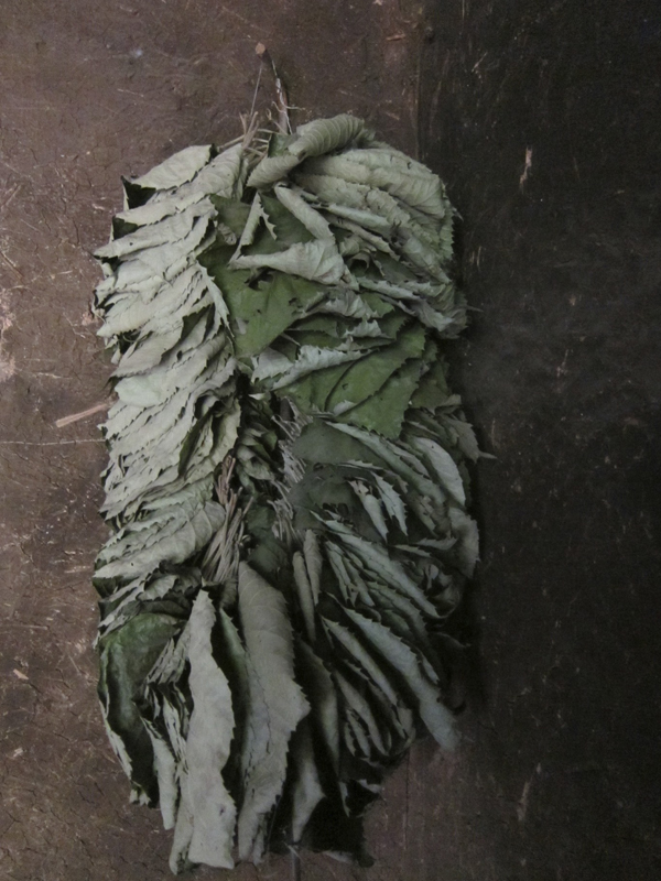 BASEhouse 50 dried leaves