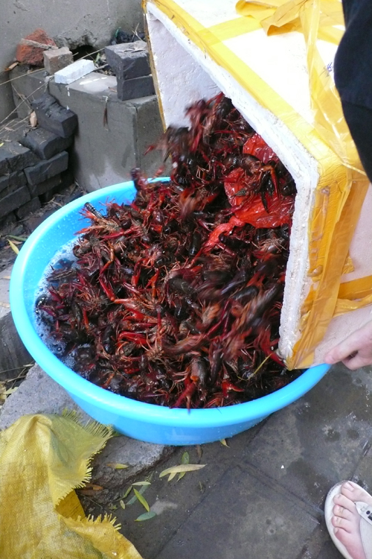 purging the crawfish